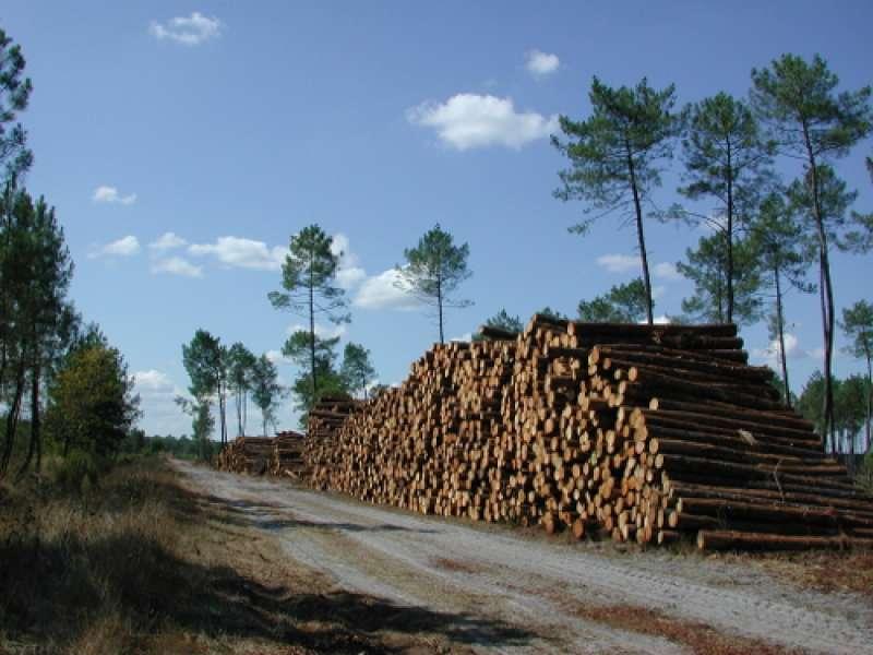 image de Houeillès, balade en forêt
